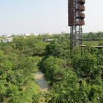 Forest in the City, Bangkok
