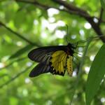 Bangkok Butterfly Garden and Insectarium, Bangkok